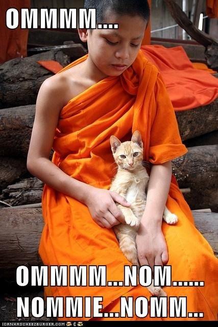 Ommm cat