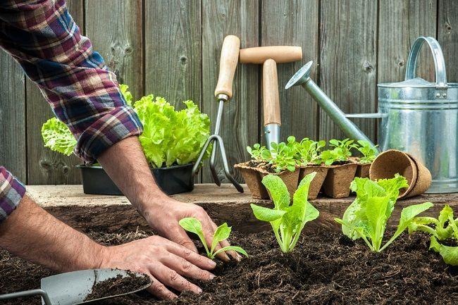 Ako vplýva práca v záhrade a špina na váš imunitný systém