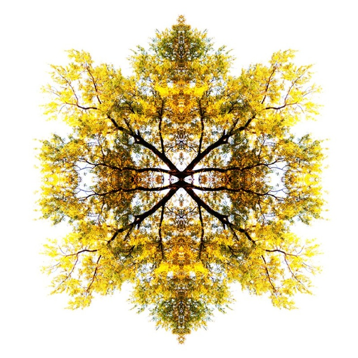 Paul Cook's fractal photo collages