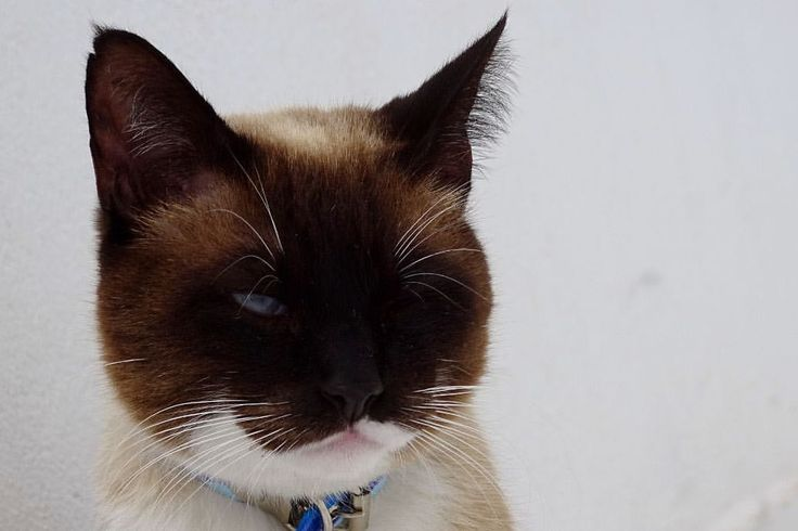 """635 curtidas, 5 comentários - Catland - Adoção de Gatinhos (@catlandrescue) no Instagram: """"Com esse jeitinho todo charmoso, o nome não poderia ser diferente. Esse é o Gato de Botas, que não…"""""""
