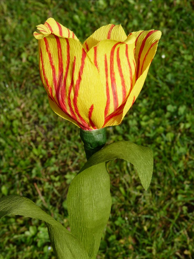 Tulipano di carta crespa # tulip # crepe paper flowers #