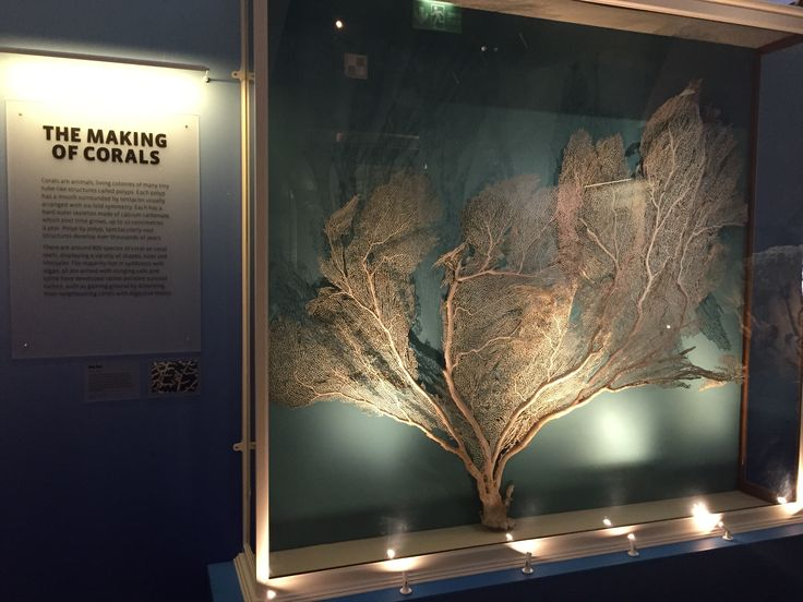 Coral Reefs: Secret Cities of the Sea. Natural History Museum, London 2015. #CoralReefs