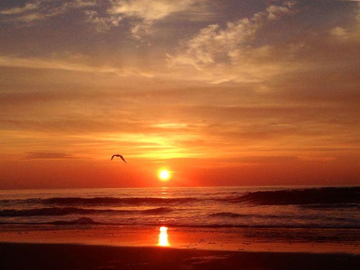 K Rays Myrtle Beach
