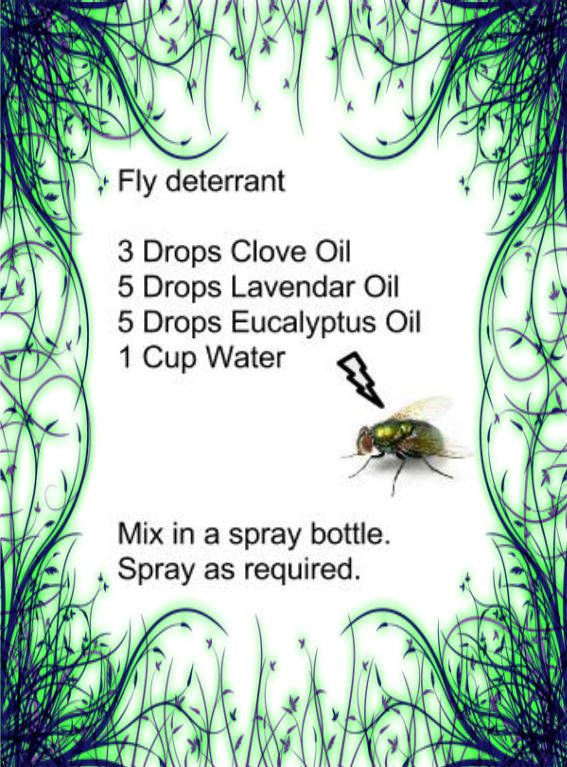 Make Your Own Fly Spray - Homemade Fly Spray with Essential oils - onto a strip of paper?