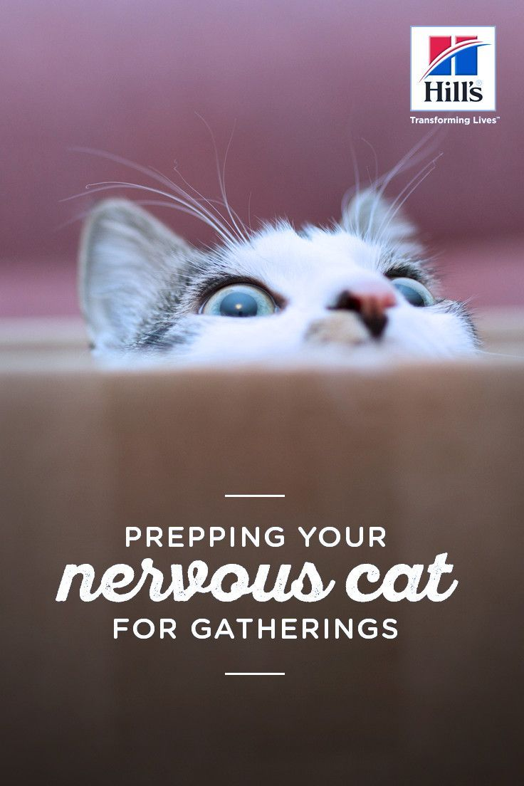 Preparing Your Nervous Cat For Gatherings In Your Home Cats Cat Care Pet Health Care