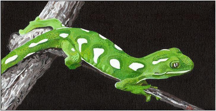 A Green Tree Gecko (genus Naultinus), found only in New Zealand.