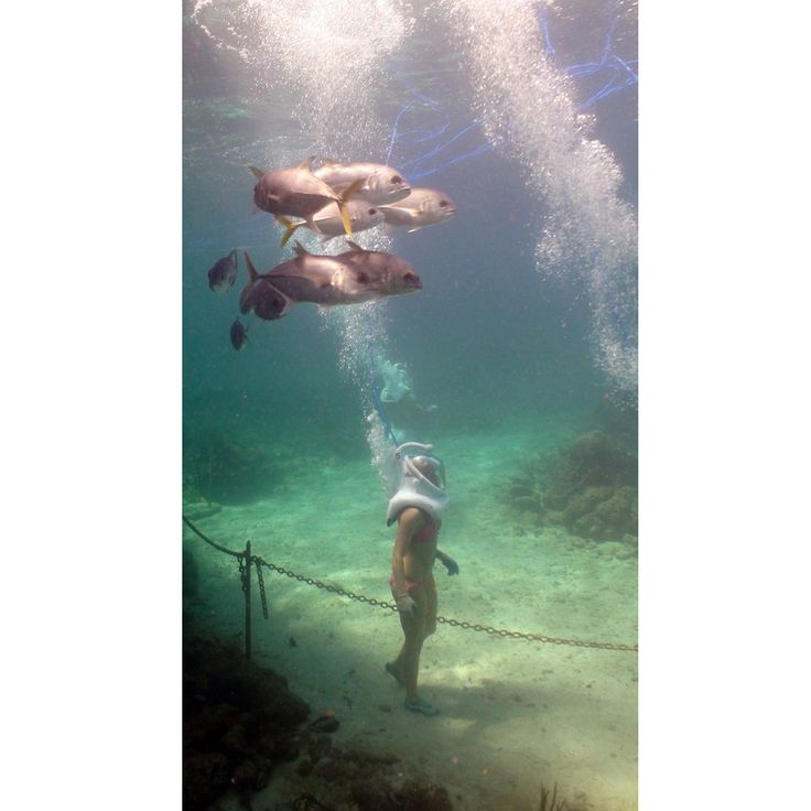 Sea Trek - Coral World, St. Thomas, USVI // I would lose my mind but I want to do it anyway!