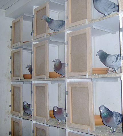 Pigeon Racing Loft And Pigeon Racing гнізда бокси