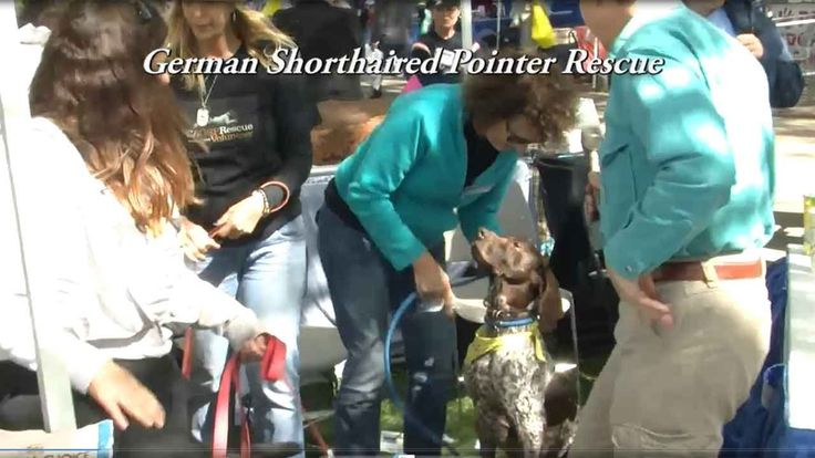 German Shorthaired Pointer Rescue