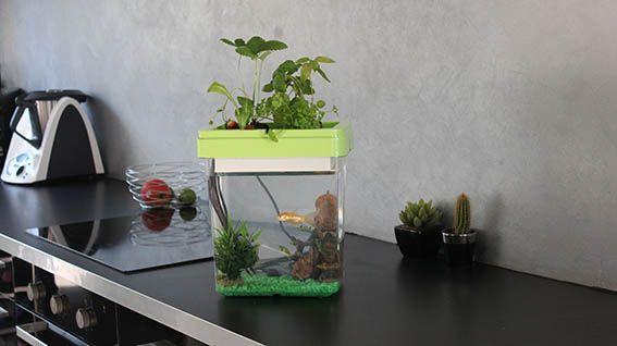 Acheter un petit aquarium pour poisson combattant, rien de plus simple : suivez nos conseils !