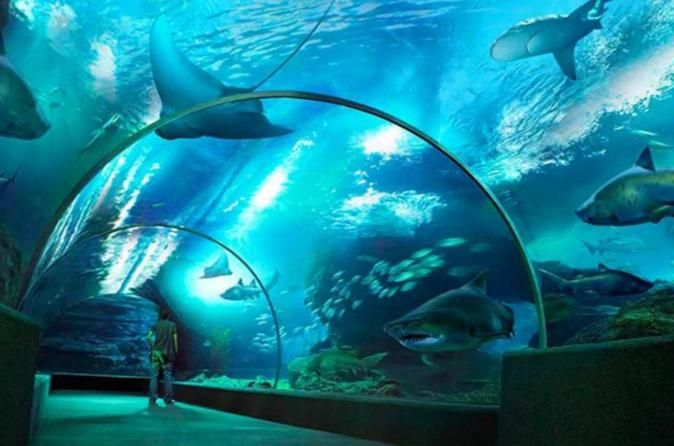 SEA LIFE Bangkok Ocean World Admission - TripAdvisor