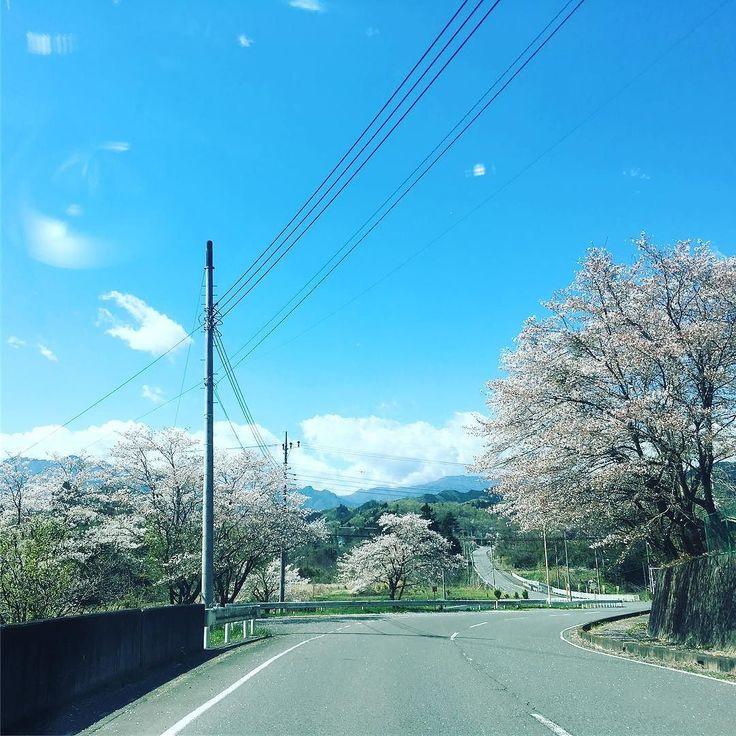 秩父の桜終わりかけもまた美しい  いつもと違うルートにナビられてたどり着いた道  これから三峰神社へ  #Tommy  #一人旅 #三峰神社