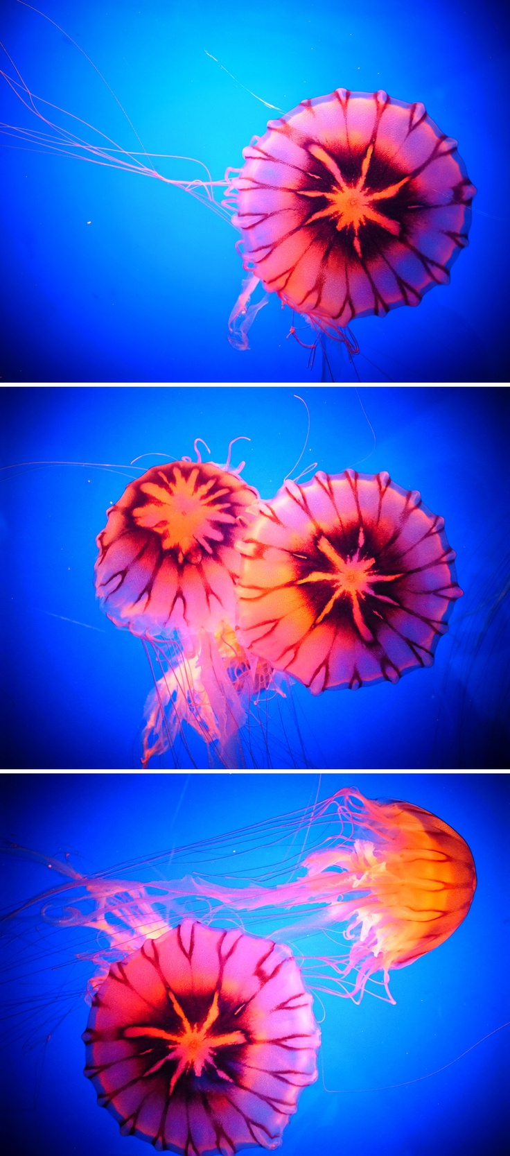 By Ninagawa Mika. Jelly fish.