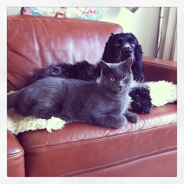 My dog & cat. Sophie & Pip, grown up