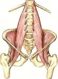 La revista digital sobre salud que hacemos entre todos los profesionales. El psoas es el músculo más profundo y estabilizador del cuerpo humano, que afecta a nuestro equilibrio estructural, amplitud de movimiento, movilidad articular y funcionamiento de los órganos del abdomen