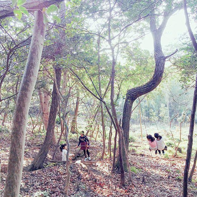 【moju32】さんのInstagramをピンしています。 《#秘密基地  ぶらんこを直して欲しいと呼ばれて今日久しぶりに行った。 . #山 #田舎 #山遊び #アウトドア #outdoors #outdoor #ぶらんこ #木登り #木 #森 #japan #photography #photo #シュタイナー  #育児 #子育て #自然 #写真が好き #iphone》