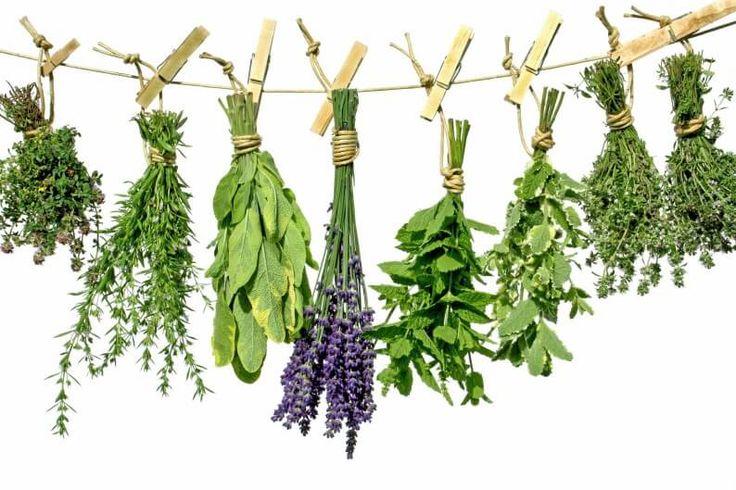5 υγιεινά μυρωδικά για πιο θρεπτικά πιάτα (με τι ταιριάζει το καθένα;) - Shape.gr