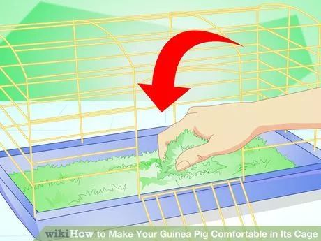Image titled Make Your Guinea Pig Comfortable in Its Cage Step 6