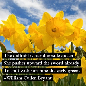 quote the daffodil is our doorside queen she pushes