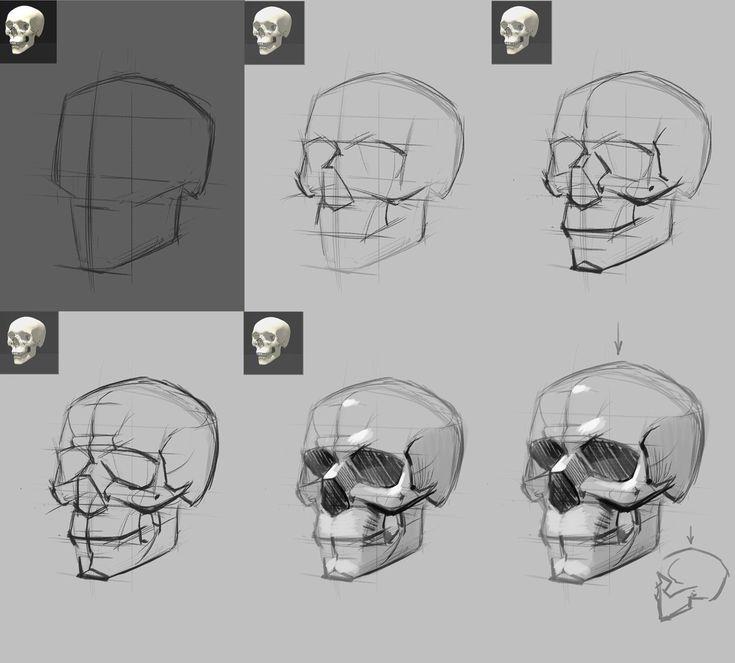 skulls                                                       …
