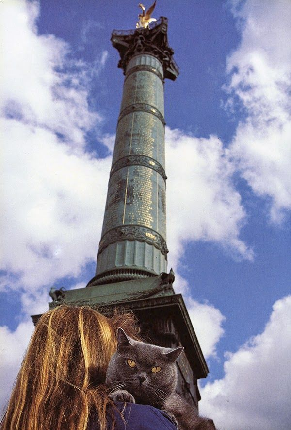 A chartreux cat in its owner take a cat selfie at the famous Place de la bastille in Paris. From http://www.traveling-cats.com/2015/02/cat-from-paris-france.html