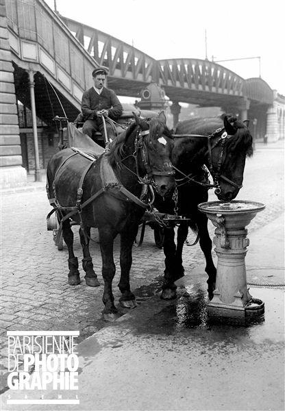 Abreuvoir pour chevaux. Paris, vers 1900 - Photo d'Albert Harlingue