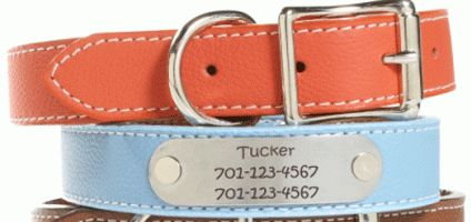 5 Dog ID Tags That Don't Jingle | Dogster - Petco also has one they embroider with dog name & your number