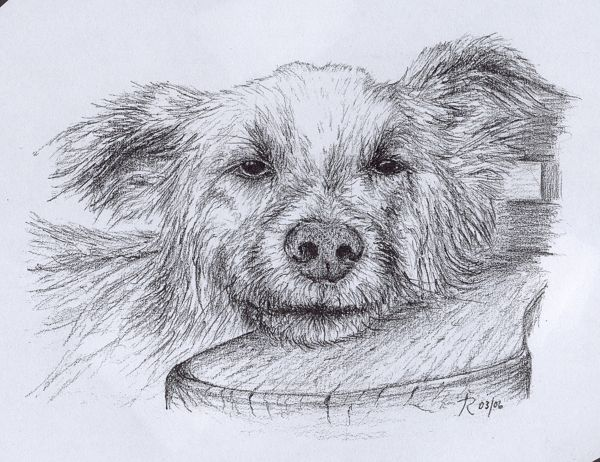 Fine Art - Pencil illustrations of animals/wildlife by Tamalia Reeves-Pyke, via Behance