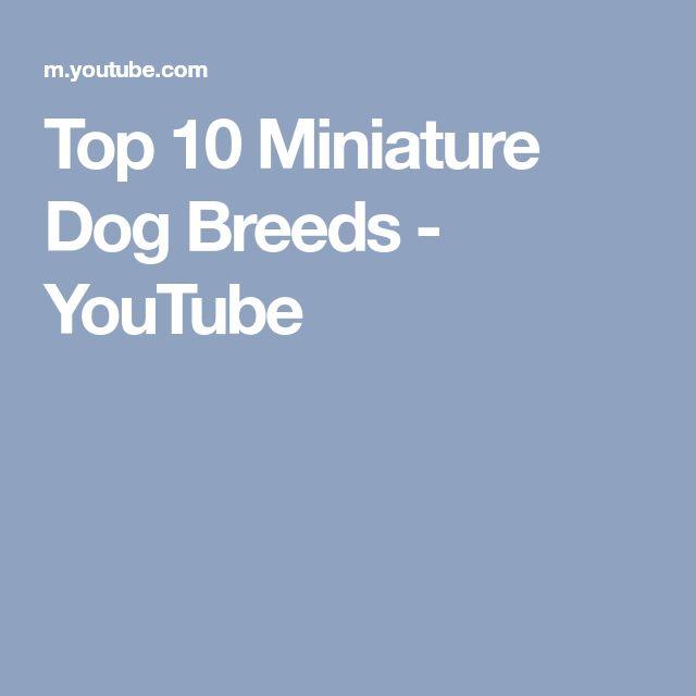 Top 10 Miniature Dog Breeds - YouTube
