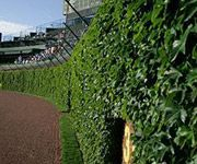 Wrigley Field - The Friendly Confines