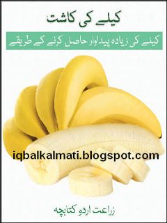 Banana Cultivationin Pakistan Urdu Book is available to read online and download http://iqbalkalmati.blogspot.com/2016/04/banana-cultivationin-pakistan-urdu-book.html