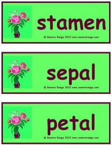Flashcards for the names of the main parts of a flower