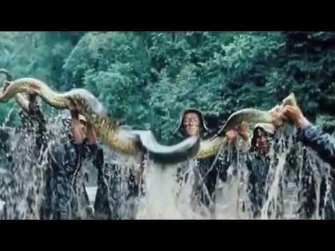 Serpiente más grande del mundo se encuentran en la serpiente pitón más g...