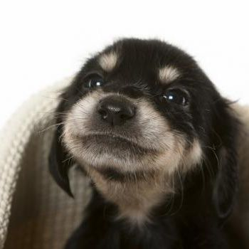 """:) """"I'm holding my breath until I GET A KISS! He's so cute"""