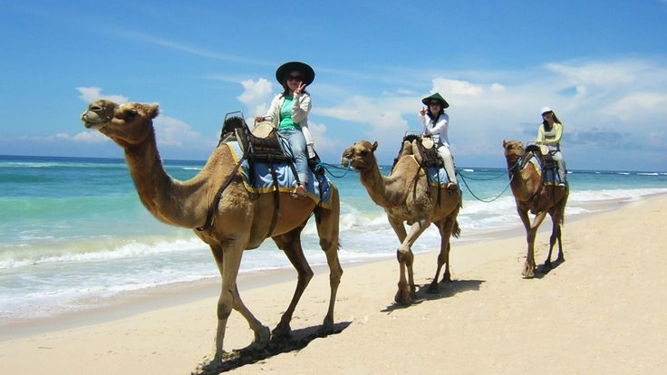 BALI- nusa dua activities: from theaters to camel rides