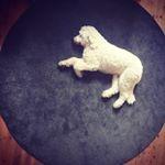 Pet Photography | Melbourne 🇦🇺