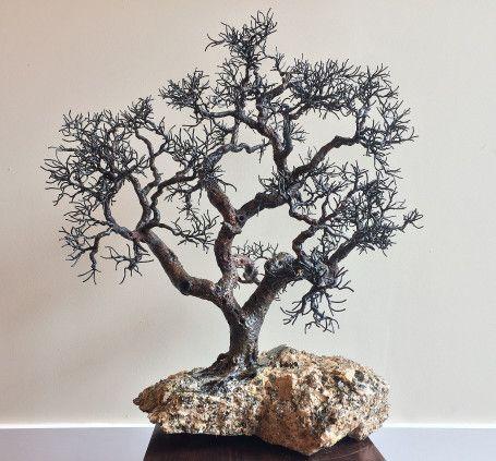 Mica Oak
