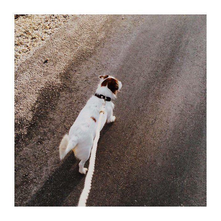 C U T E N E S S | weekend walk with Inni.  Regram: @