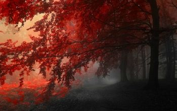 Tierra - Bosque Wallpapers and Backgrounds