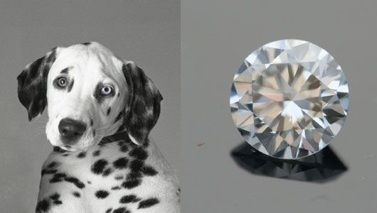 Ashes to ashes, dust to … diamonds? Take your beloved furry friends' remains and have them turned into a diamond.