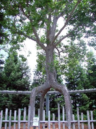 22 best images about tin can travels california on for Gilroy garden trees