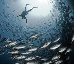 Výstava: Podmořský svět