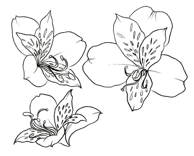 Peruvian Lily Flowers Tattoo Metacharis Deviantart