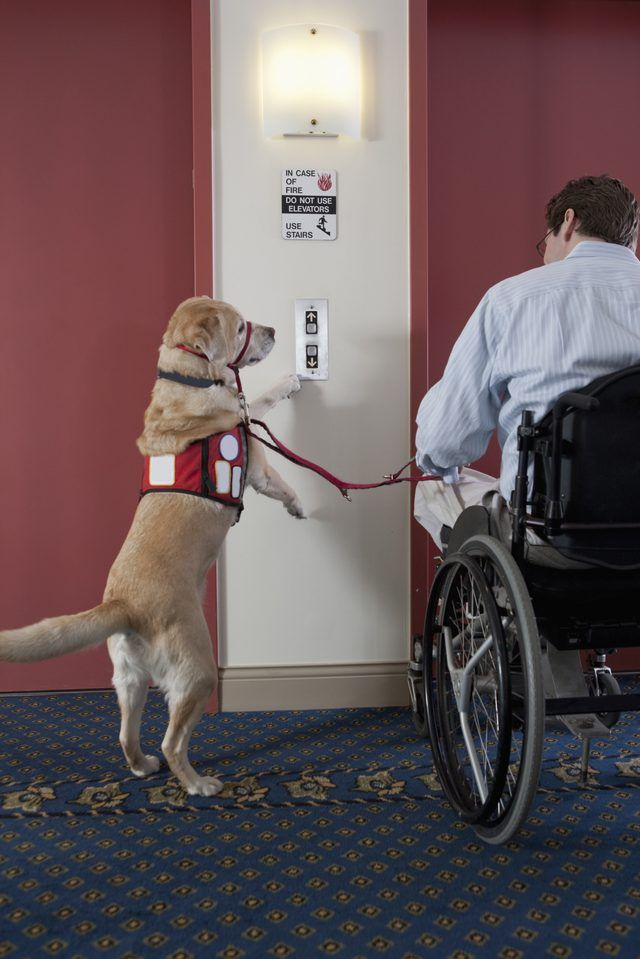 What Do The Vest Colors Mean For Service Dogs Service Dogs Dog