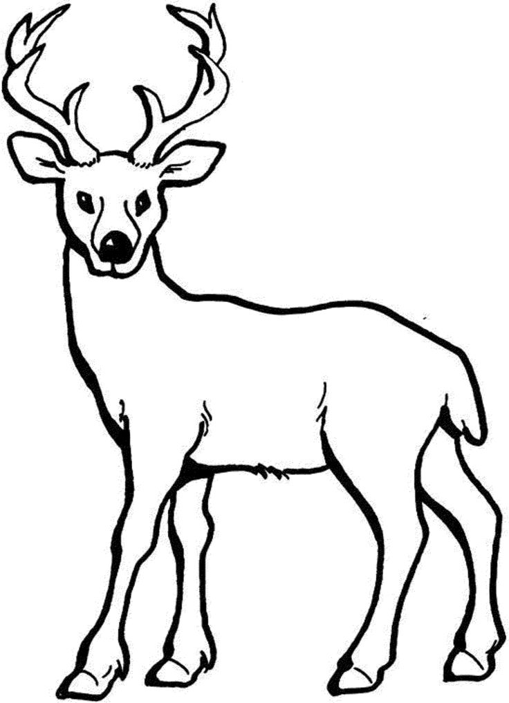 Coloring Pages Of Deer Printable Kids Colouring Pages Deer Sketch Deer Coloring Pages Animal Coloring Pages