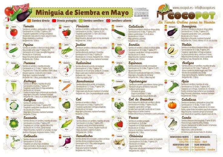 Actualizada la Miniguía de Siembra en mayo para tu #huertourbano con más…