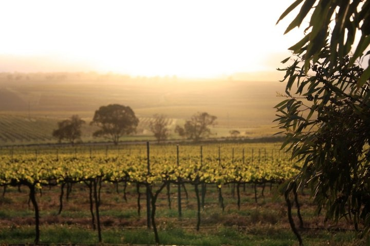 Clare Valley, South Australia