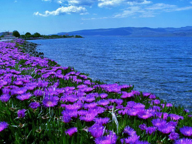 ~ Nyfida Beach, Lesvos, Greece ~