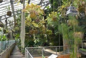 Invernadero del Real Jardín Botánico.