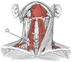 胸骨甲状筋